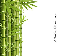 Green bamboo grove isolated on white