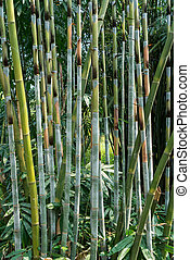 green bamboo in a forest