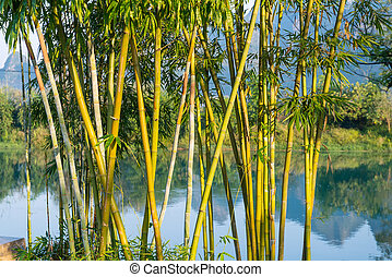 green bamboo in river