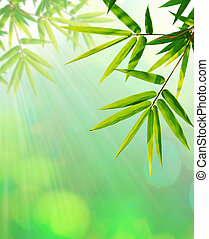 Green bamboo leaf abstract backgrou