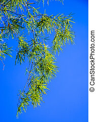 Green bamboo leaves against a blue sky background