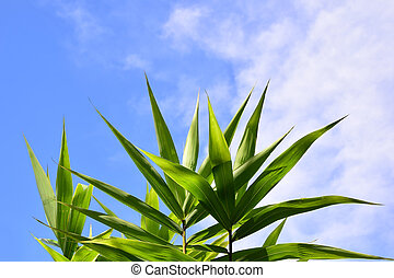 Green bamboo leaves on blue  sky for background