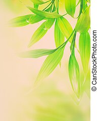 Green bamboo leaves over abstract blurred background
