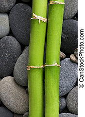 green bamboo on pebble