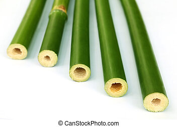 Green bamboo over white background