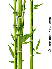 Green Bamboo stems isolated on the white background