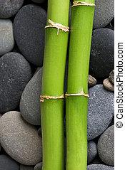green bamboo on pebble