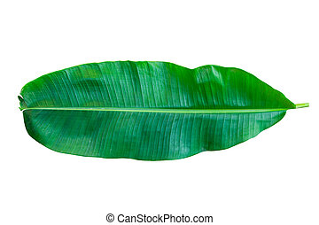 green banana leaf isolated on white background