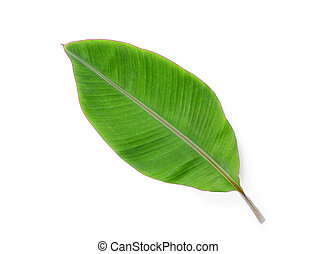 green banana Leaf isolated on white background with shadow