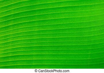 green banana leaf