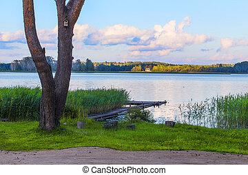 Green bank of a lake