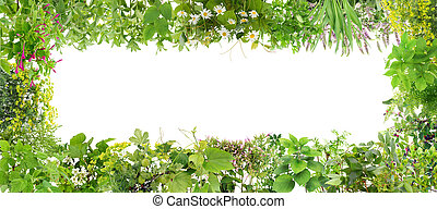 Green banner from plants - Green banner collage frame from ...