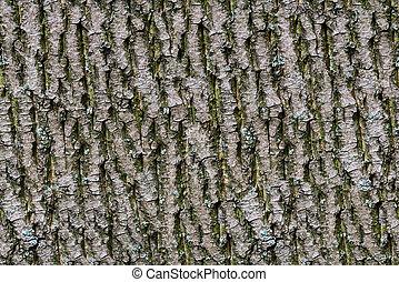 Bark of tree. Seamless Tileable Texture. - Green Bark of...