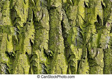 Green Bark of tree. Seamless Tileable Texture.