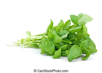 Green basil isolated on the white background