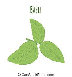 Green basil leaves. Vegetarian herbal condiment. Vector illustration