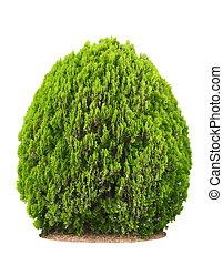 Green beautiful bush isolated on white background