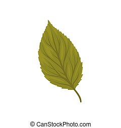 Green beech leaf vector Illustration on a white background