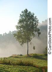 Green birch tree in the early morning fog