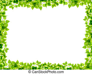 Green birch twigs frame isolated