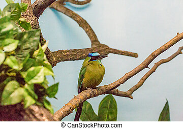 Green Bird with Blue Crown