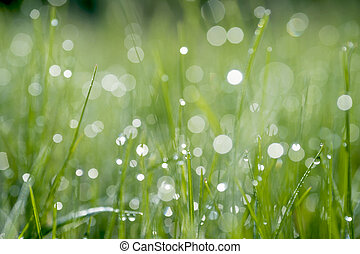 Green blade of grass close-up with a drop of dew on a blurred green background of the meadow