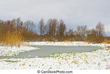 Green blade of grass through the snow on river