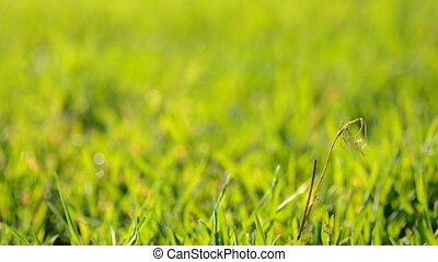 Green Blured Grass With Focus Motion