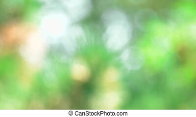 Green blurred background.