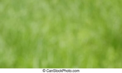 green blurred background of grass