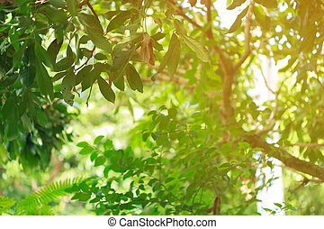 green bokeh light through tree in summer nature, abstract blur image background