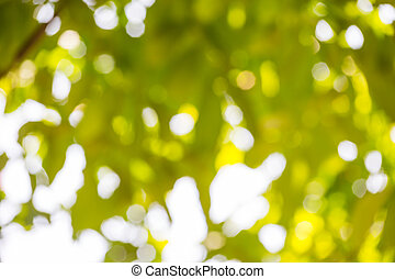 green bokeh of nature use for background