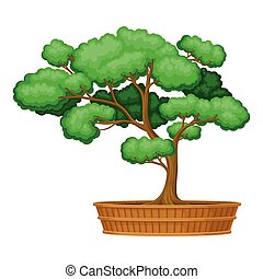 Green Bonsai Tree as Potted Plant with Lush Crown Vector ...