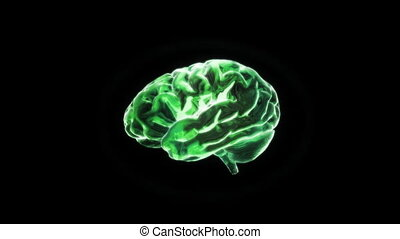 green brain - X-ray Brain to represent the theme of human,...