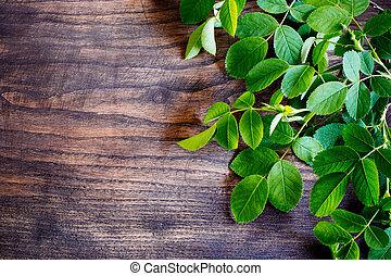 green branch of tea-rose