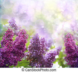 lilac flowers - Green branch with spring lilac flowers