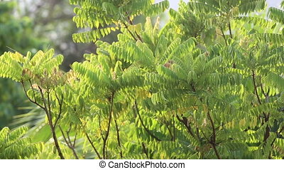 green branches in tropics