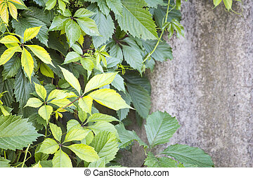 Green branches on a brick wall background