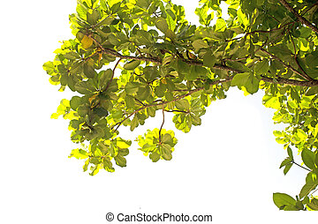 Green branches on a white background