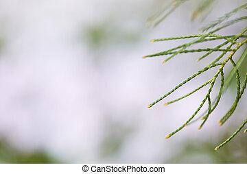 green branches on the blur garden background.