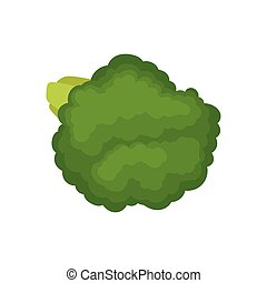 Green broccoli concept. Organic food. Vector illustration.