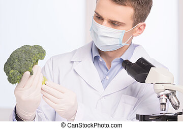 green broccoli in genetic engineering laboratory. man holding broccoli and looking on white background