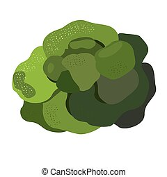 green broccoli on a white background as an element