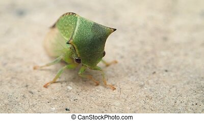 Green bug moving - A green bug moving