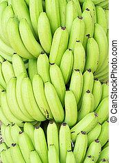 Green bunches of Cavendish banana