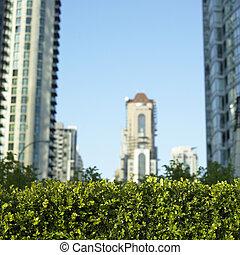Green bush and city view