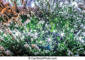 green bush covered in snow at night with lights. Closeup of Christmas lights
