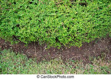 green bush in garden for decor