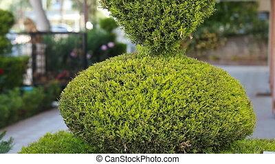 green bush in heart shape standing in - line nature...