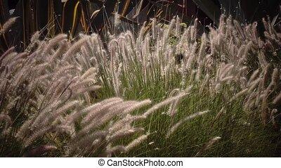 Green bush is like reeds, the wind shakes it - Green bush is...